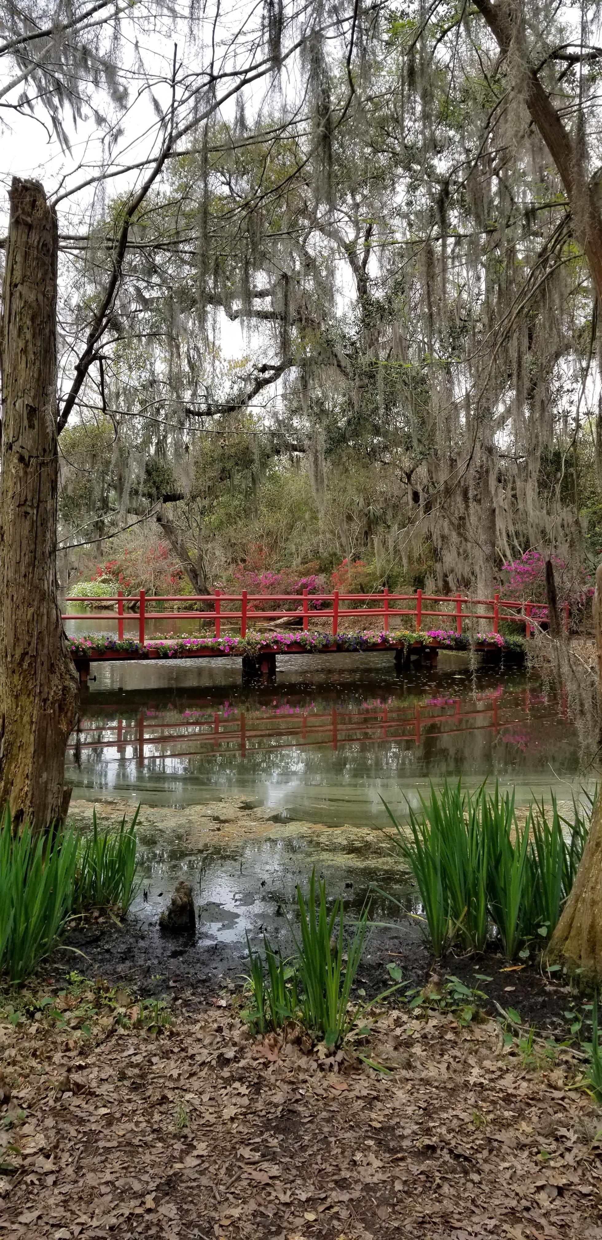 Oh Charleston…. Angel oak trees, Ghost tour, Angel oak