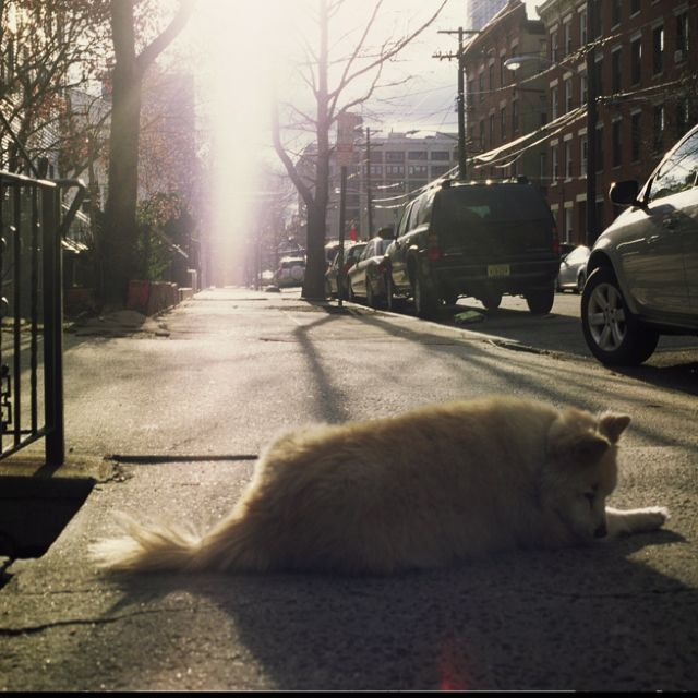 Sam laying on the sidewalk in Jersey City, New Jersey....Photo by Don Sipley