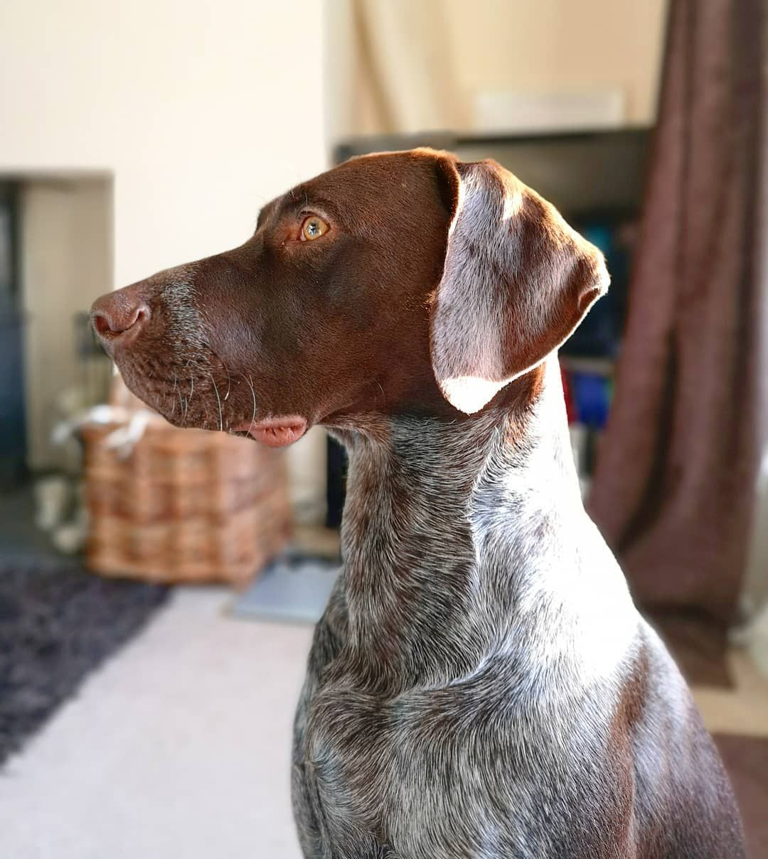 Watch the Best YouTube Videos Online -  So this morning I thought I'd pose in the sunshine whilst staring at a rabbit in the garden #PercyPointer . . . . . #rabbit #pose #posing #profile #sideprofile #growingup #handsome #someboy #birddog #birddoglife #gundog #gubdoglife #workingdog #workingdogcommunity #gsp #pointer #germanpointer #GermanShorthairedPointer #germanpointerofinstagram #gspoftheday #gspofinstagram #GspCommunity #puppy #puppyadventures #puppyspam #dogadevntures @gspoftheday #like #f
