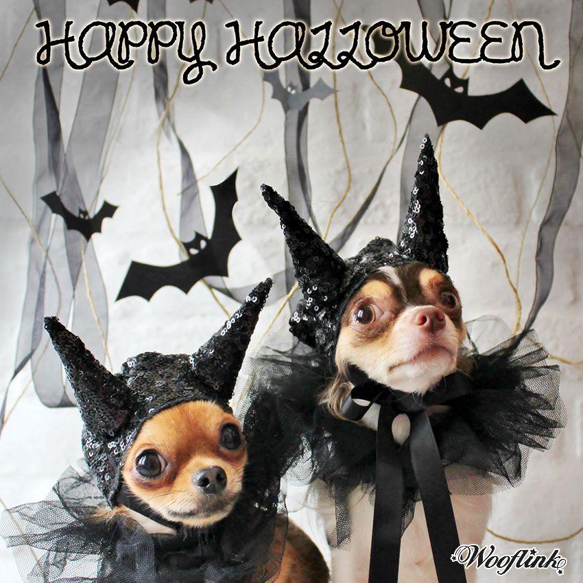 Chihuahuas Halloween ready.