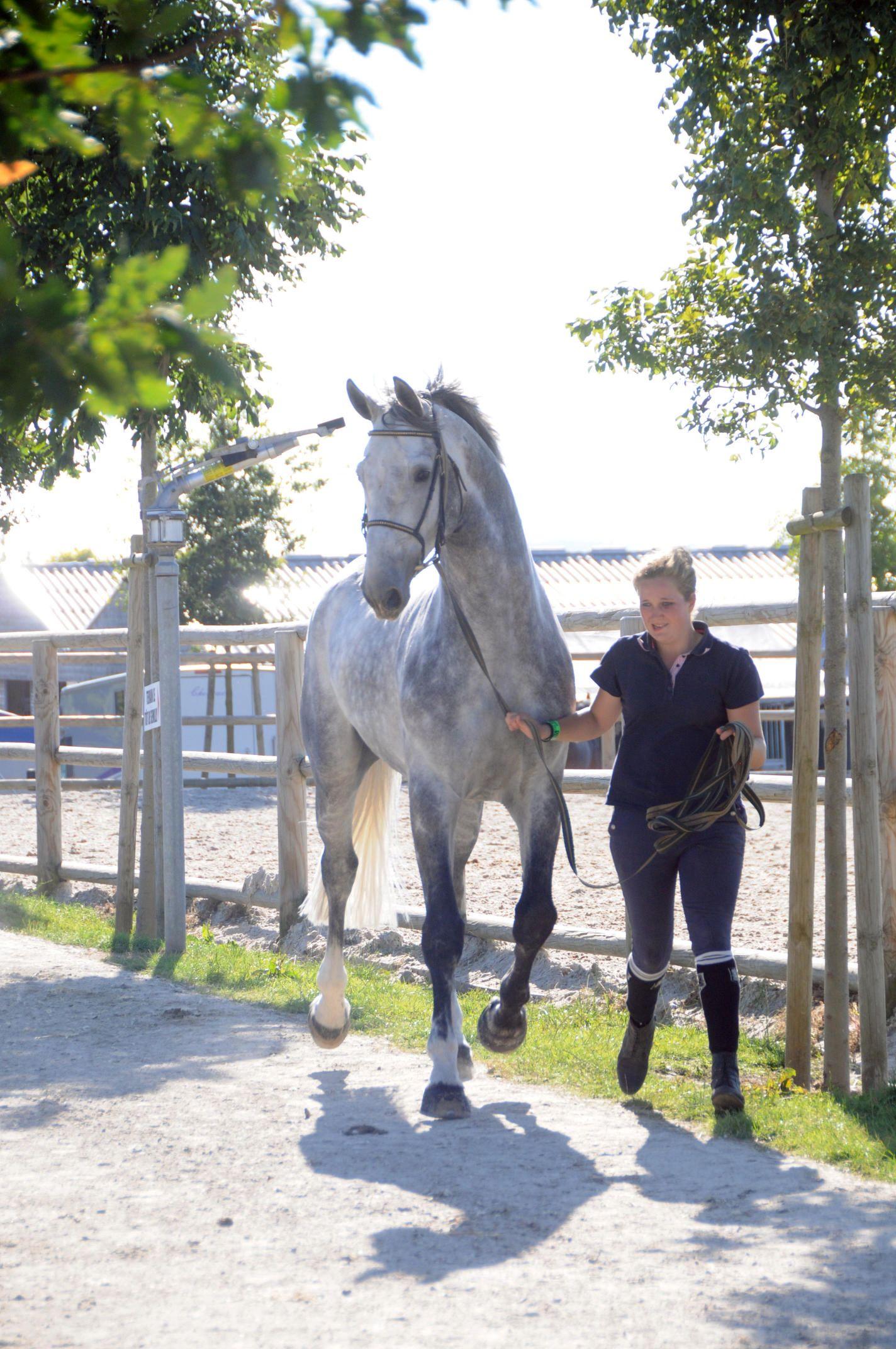 Concours d'élevage - Normandie Horse Show - (c) Pixels Events