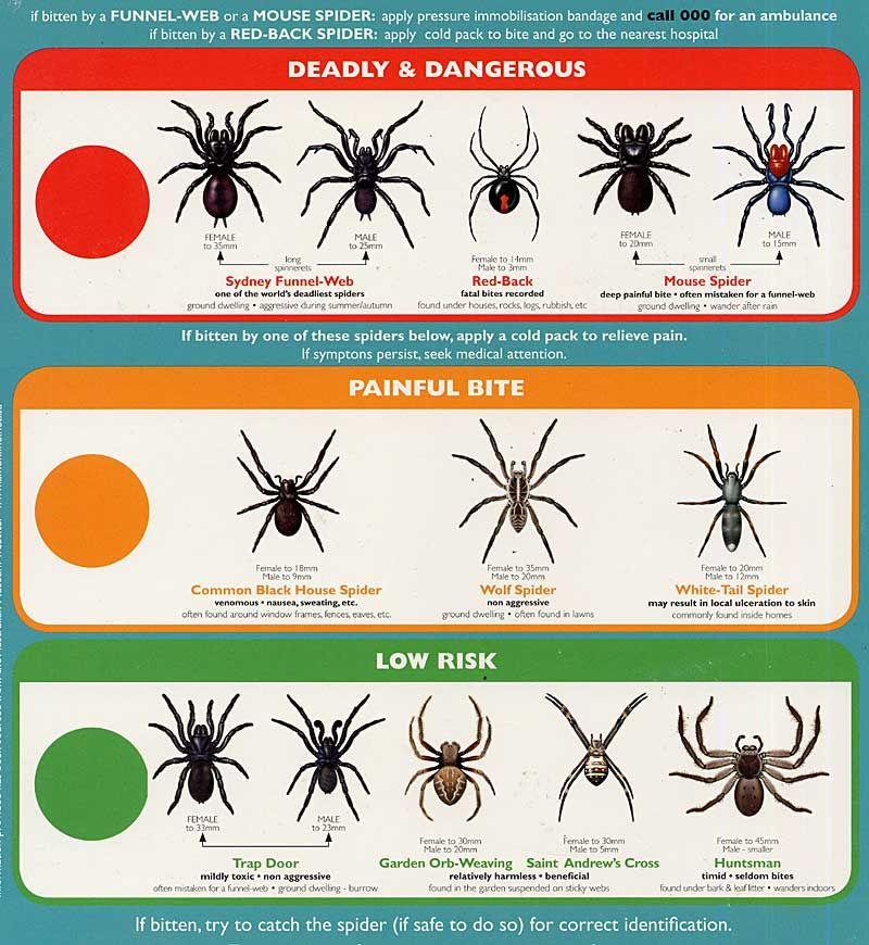 Spider identification  types of spiders wolfspider also rh pinterest