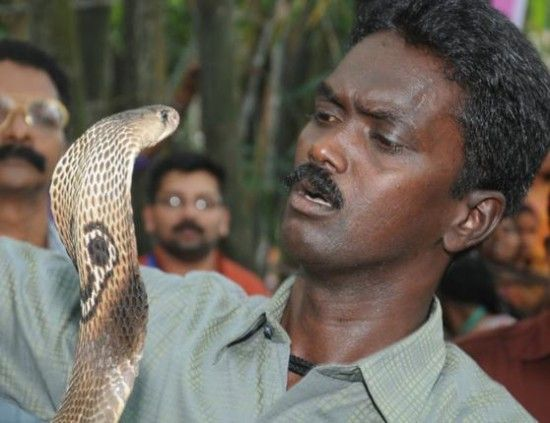 """Indian """"Snake Man"""" Charms The Globe's Deadliest Snakes, Looks A Little Bit Mind-Blowing, And A Little Scary."""