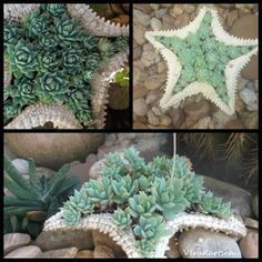 I just love these succulent planters - such an adorable way of showcasing these unusual plants :) . AND . . . . the website is dedicated to photographs of just succulents. So cool!