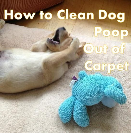 Here Is The Best Method For How To Clean Dog Poop Out Of