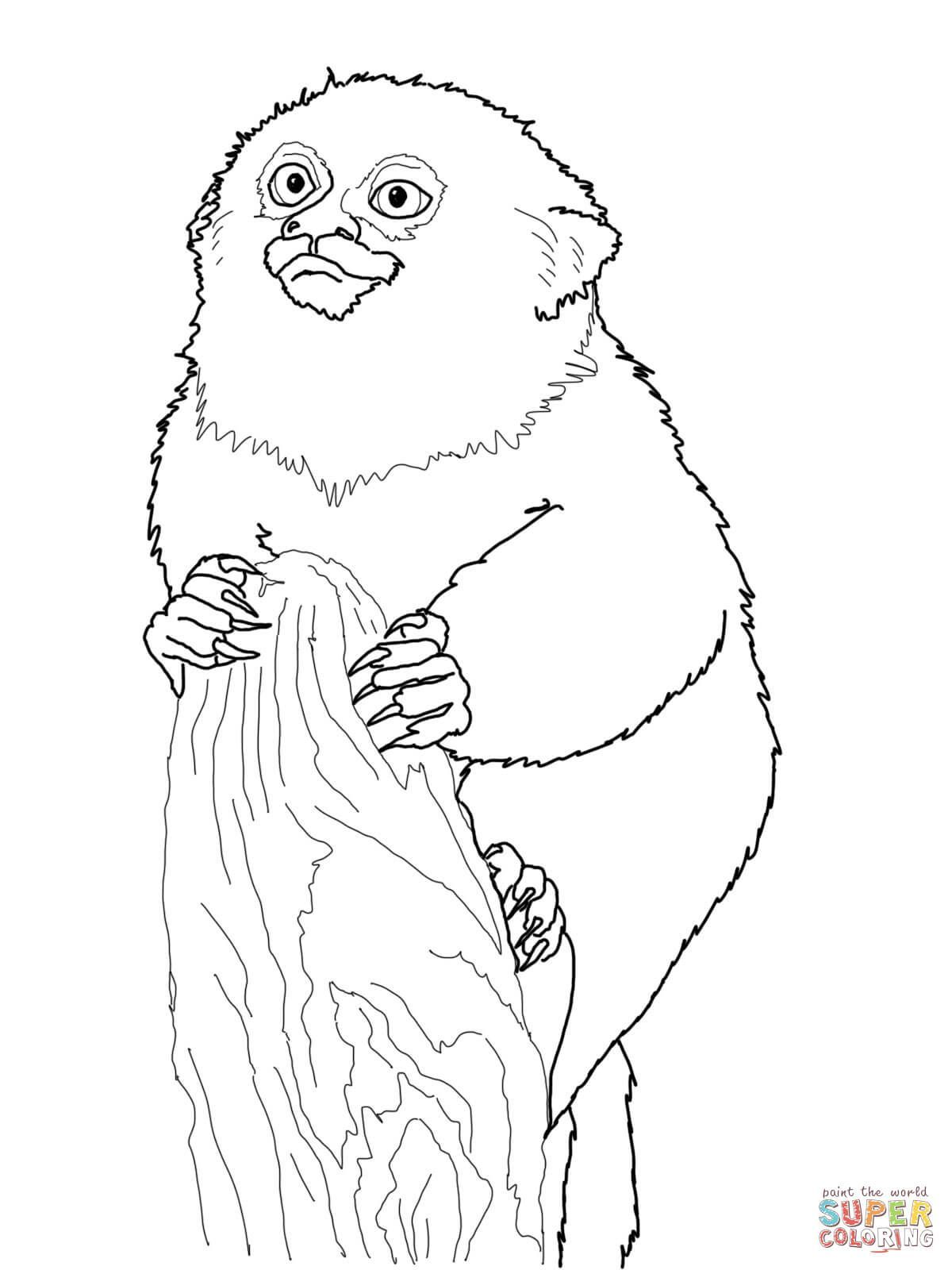 Golden Lion Tamarin Coloring Page