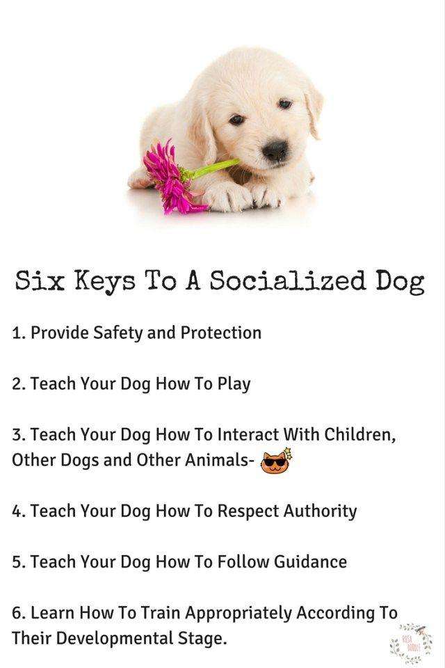 Six Secrets to a Socialized Dog   Healthy Pet Care