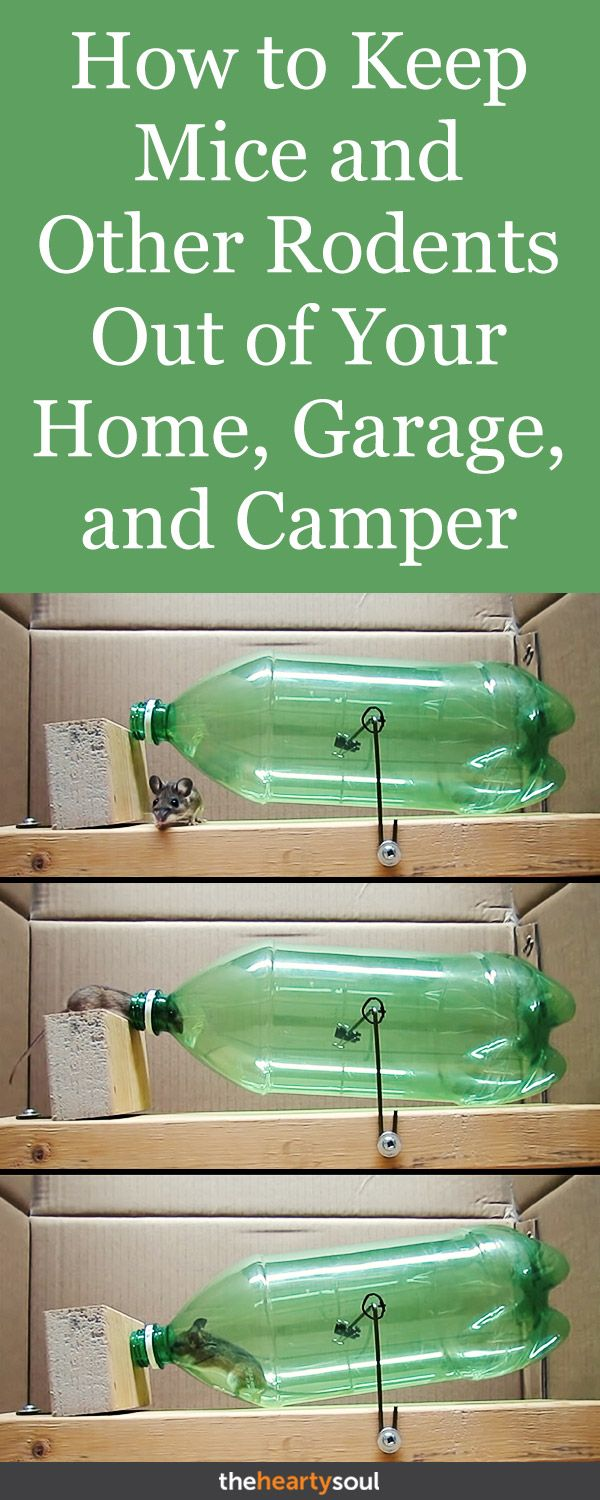 The Best Way To Keep Mice Out Of Campers