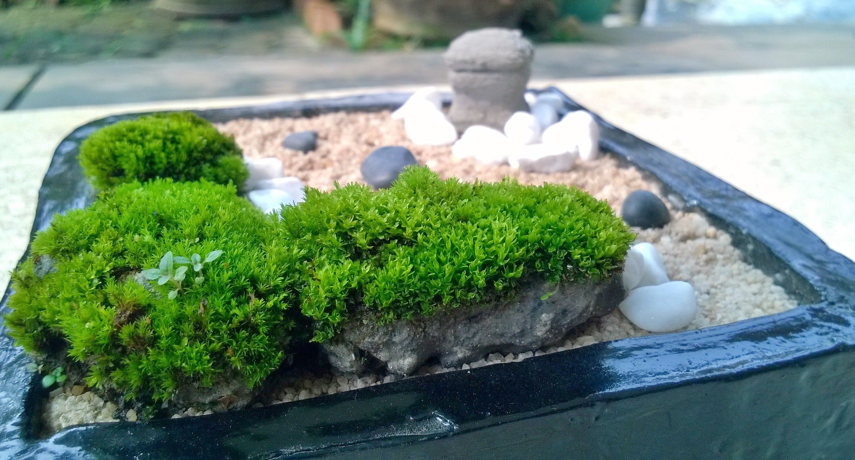 Nature moss mini zen garden diy mini zen garden for Mini zen garden designs