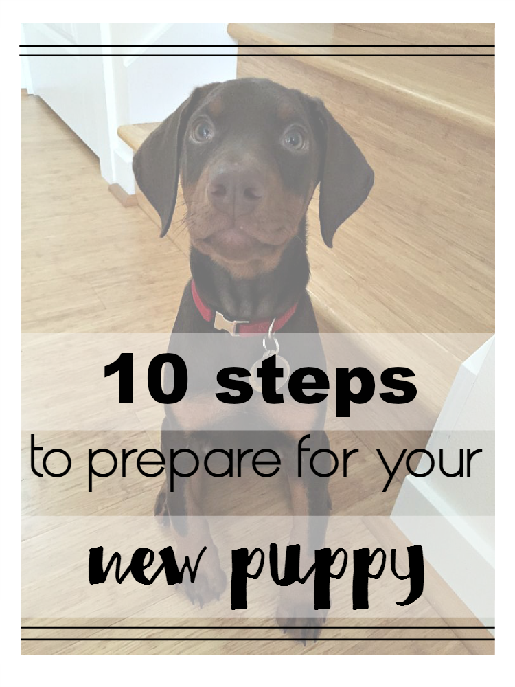 The Top Ten Things To Do to Prepare for a New Puppy | Best ...