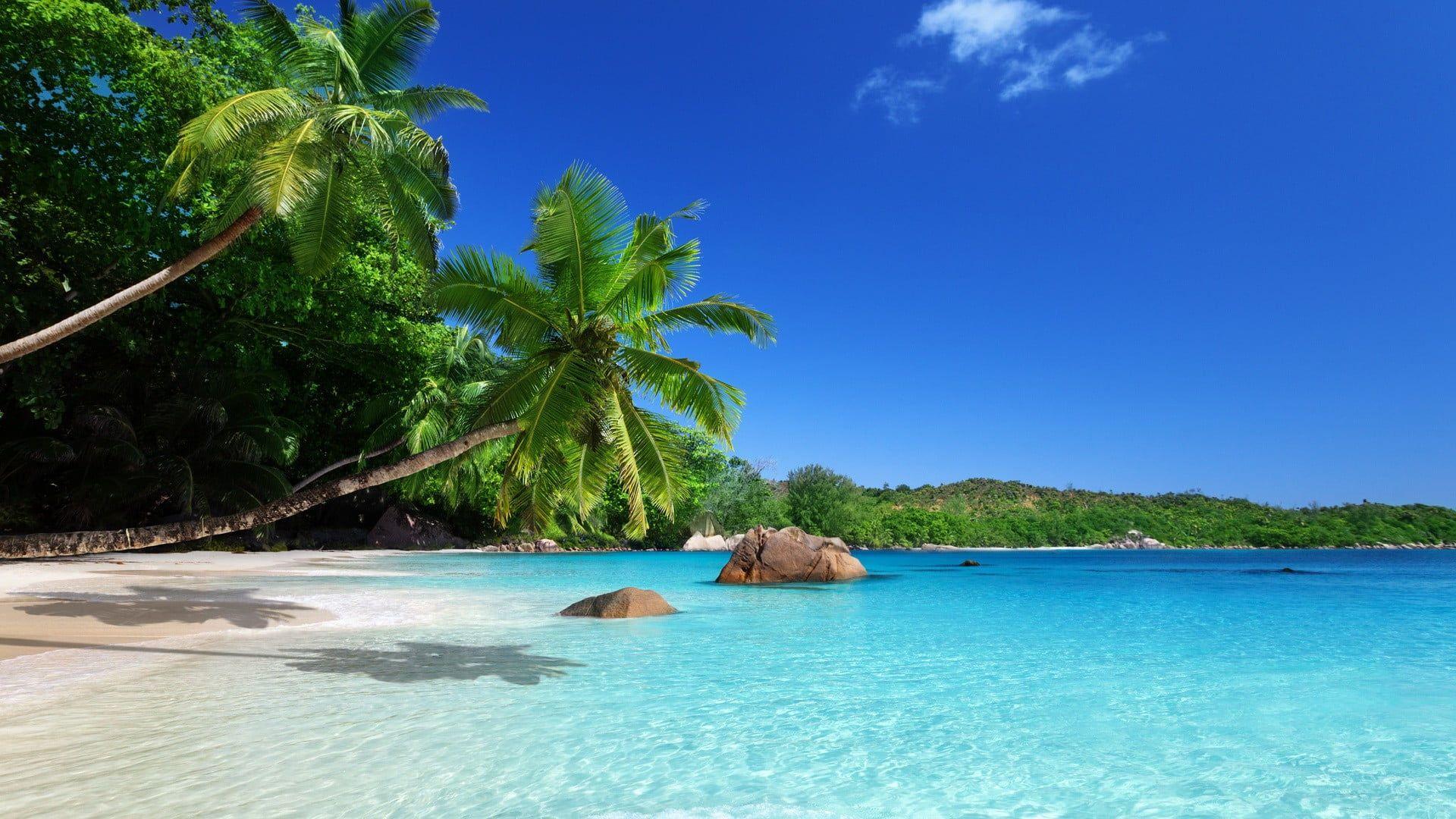 Two Coconut Trees Landscape Beach Palm Trees Tropical Sea 1080p Wallpaper Hdwallpaper De Tropical Paradise Wallpaper Landscape Beach Paradise Wallpaper Desktop wallpaper beach paradise