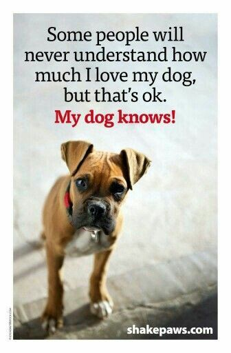 Bunty Thepugsmummy Dogs Dog Quotes Boxer Dogs