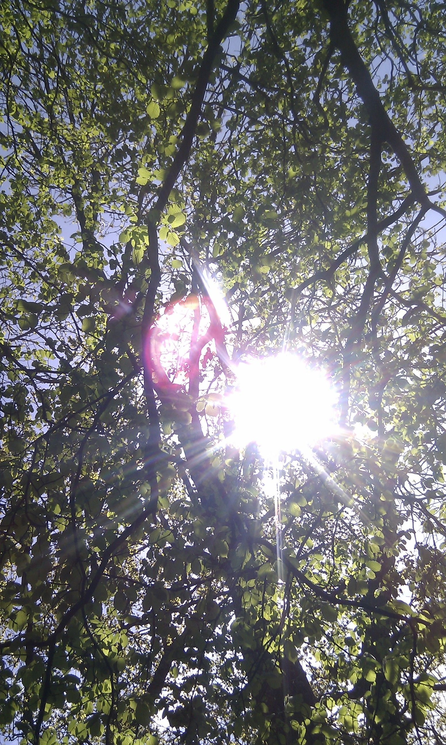 Spring time walk at Woodside