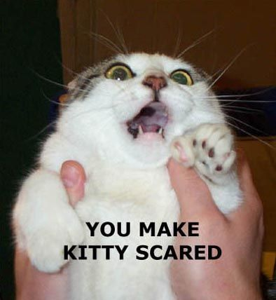 face joke scary | Funny cat photos, Scared cat, Silly cats pictures