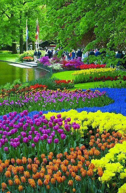 Colourful flowers in the  Netherlands