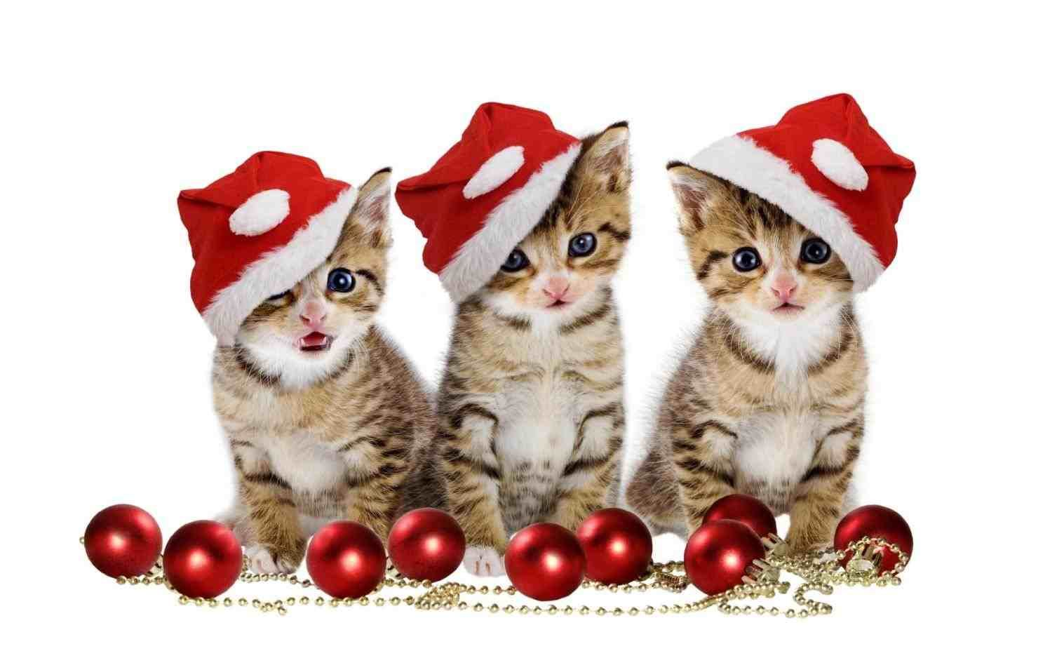 New Post Merry Christmas Cute Cat