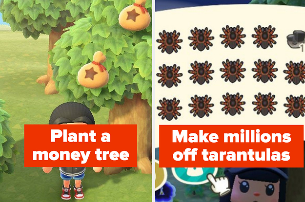 Animal Crossing New Leaf How To Get Money Trees