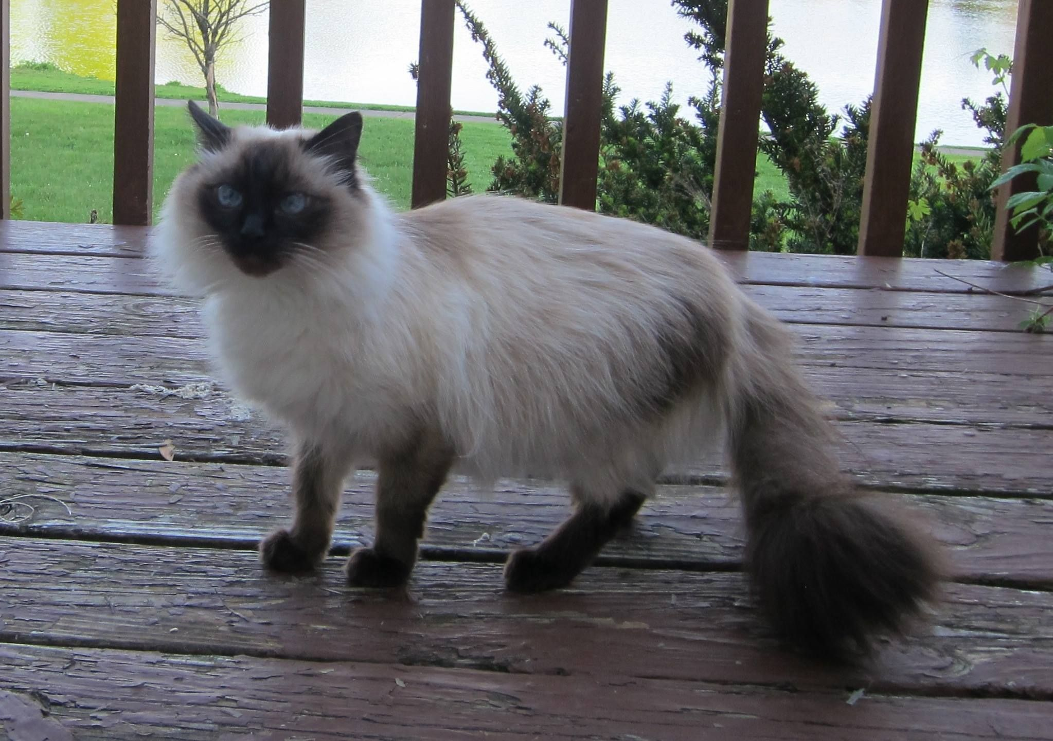 uliya Gilshteyn to CT Lost/Found Pet Page 1 min · Plusha