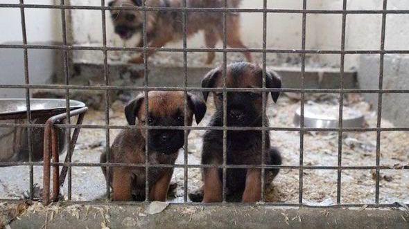 PETITION· Close Dogs4Us - Puppy Farm Pet Shop! · Changeorg STOP