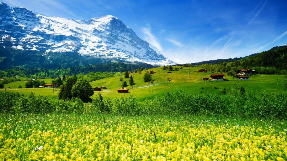 Spring Landscape Nature Switzerland Meadow With Yellow Flowers And Green Grass Mountainous Villages Snowy Mountains Desktop Hd Wallpaper For Pc Tablet And Mobil Spring Landscape Landscape Wallpaper Beautiful Wallpaper Hd