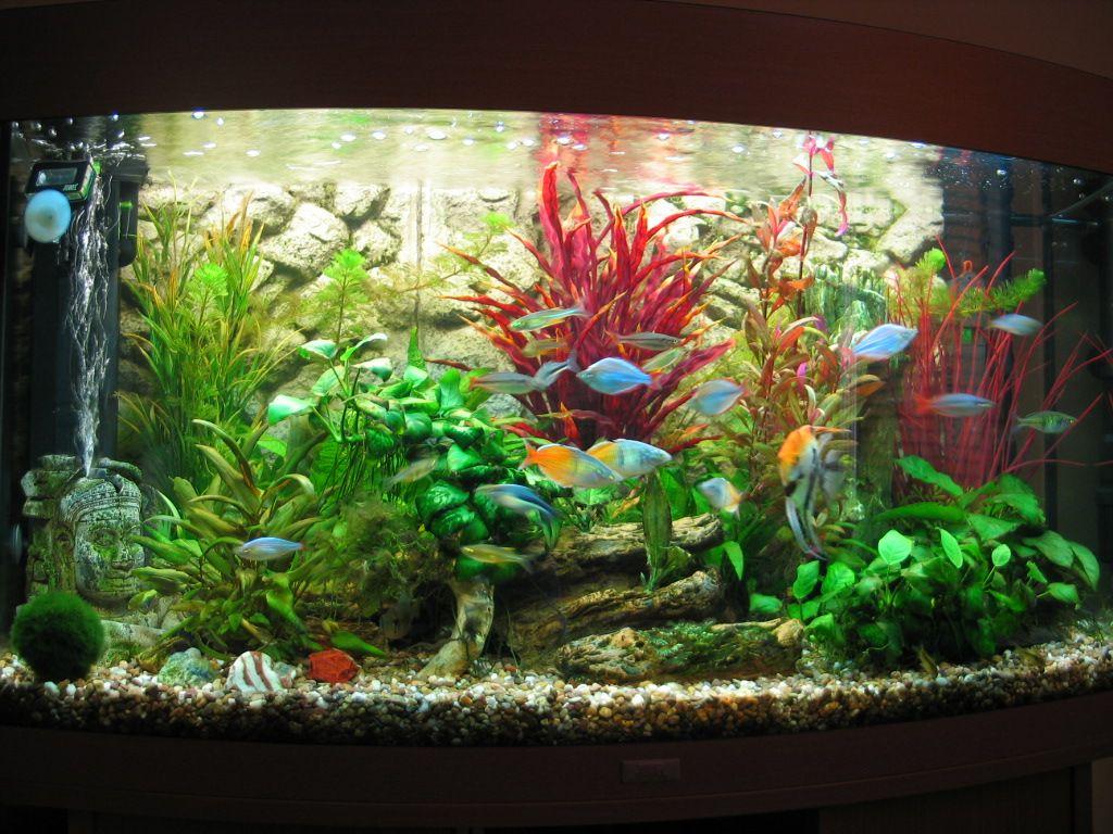 58724d1304163245 mix rainbowfish tank img 1024 for Rainbow fish care