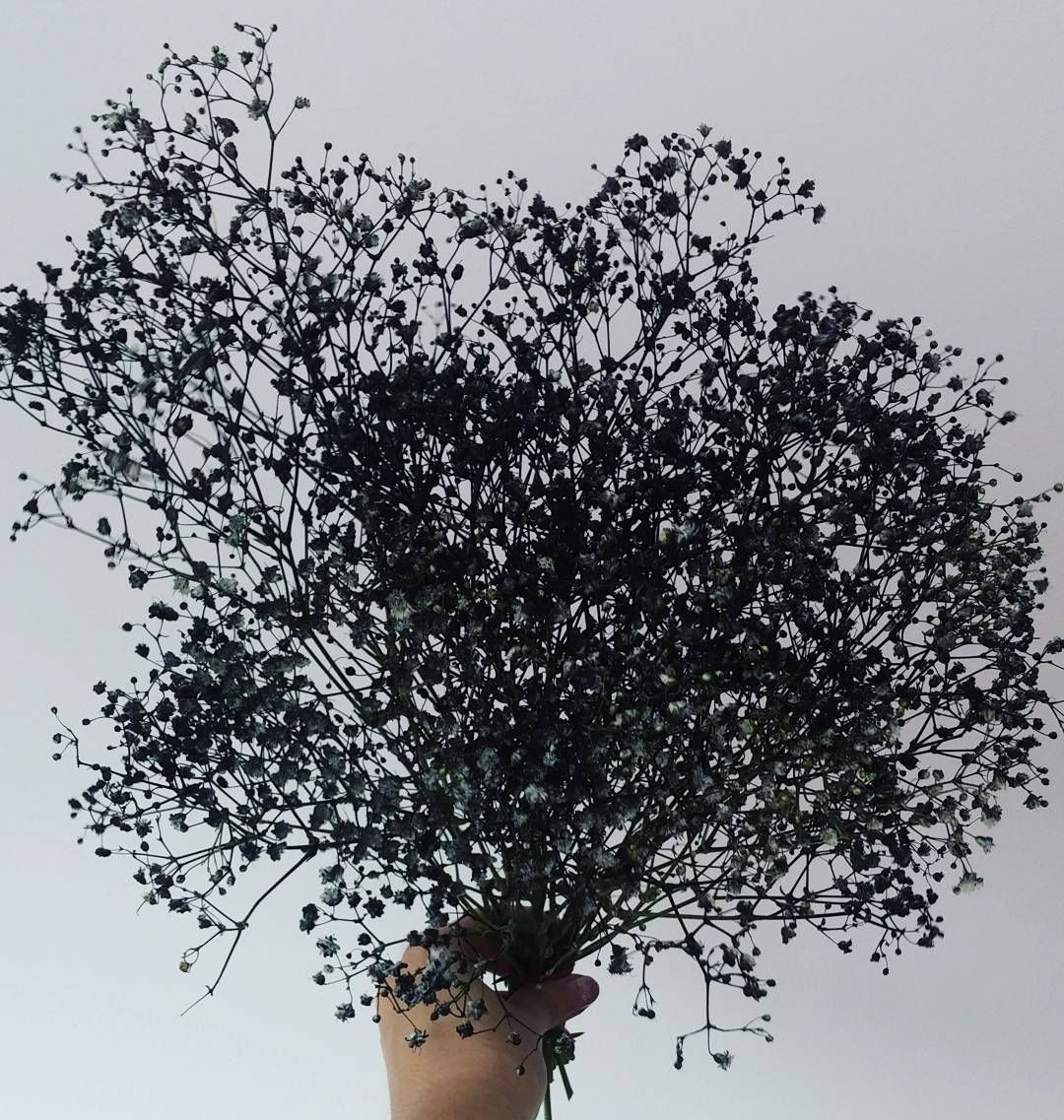 Hipmer On Instagram How About Some Cool Black Sprayed Dried Baby S Breath Gypsophila Trial 1 Drying Dyed Babys Breath Flowers Dyed Flowers Amazing Flowers
