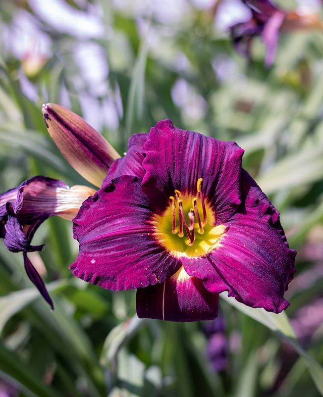Pretty blooms 💜🌸 ⠀⠀⠀⠀⠀⠀⠀⠀⠀ ⠀⠀⠀⠀⠀⠀⠀⠀⠀ ⠀⠀⠀⠀⠀⠀⠀⠀⠀ ⠀⠀⠀⠀⠀⠀⠀⠀⠀ ⠀⠀⠀⠀⠀⠀⠀⠀⠀ ⠀⠀⠀⠀⠀⠀⠀⠀⠀ ⠀⠀⠀⠀⠀⠀⠀⠀⠀ #agameoftone #everydayphotography #everydayphoto #liveinthenow #naturehealsthesoul #canonmoments #gurushotschallenge #inspiremygram #darlingmovements #beboundless #folkvibes #thewonderco #liveauthentically #myproshot #viewbugfeature #canonmoment #wonderlustcollective #darlingmoments #risingtide #theartofslowingdown #startwithwhy #folkcreatives #bigmagic #calledtocreate #thinkcreative #summervibes #prettybloo