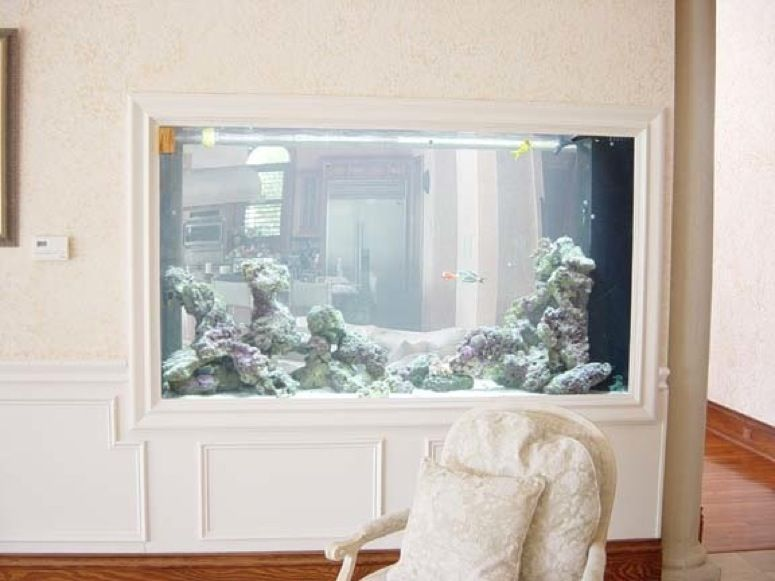 would love to do this between room aquarium idea! | Aquarium ...
