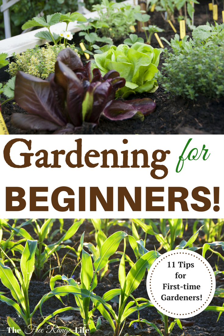 11 tips for a successful first garden the o 39 jays for Gardening for beginners