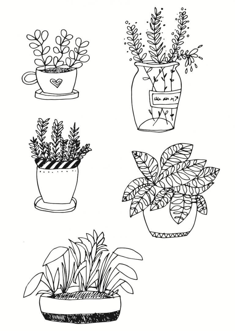 Pflanzen Zeichnen Für Anfänger Zeichnen Für Anfänger