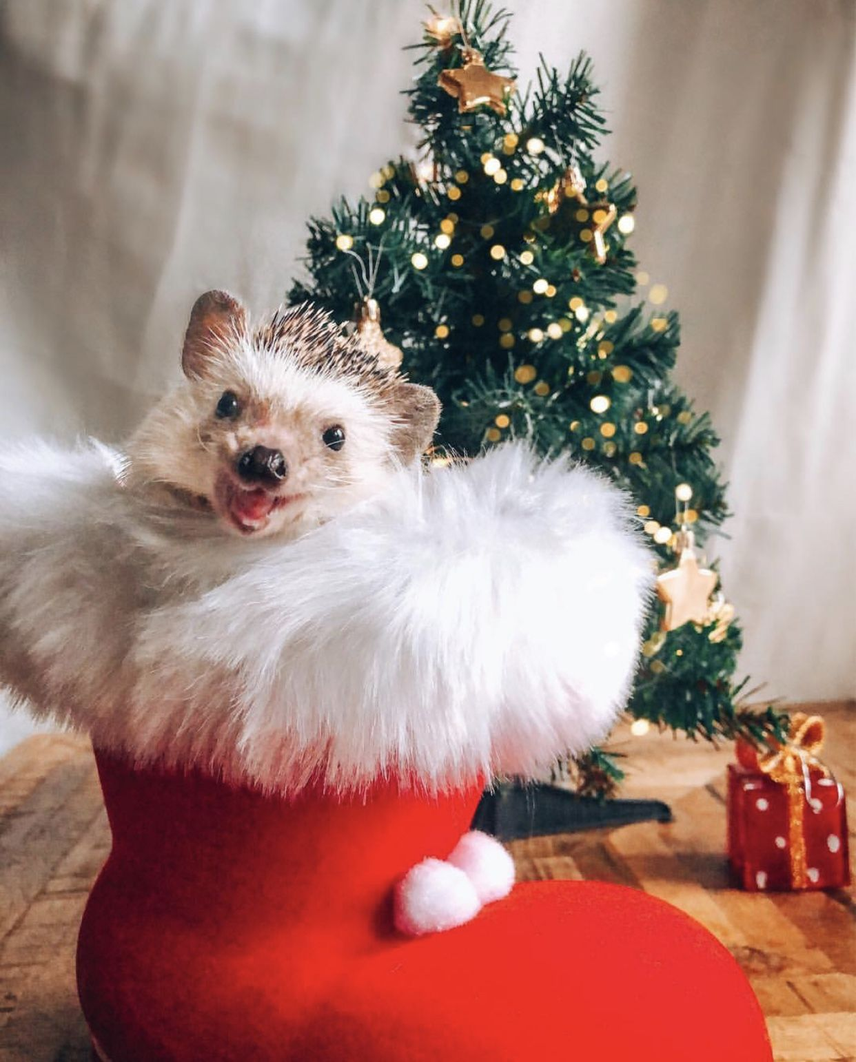 Pin By Ella Lewis On Animals Funny Hedgehog Pet Holiday Cute Baby Animals