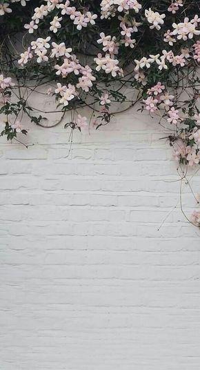 Pin On Wallpaper Bunga
