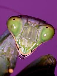 Resultado de imagem para fotos de besouros raros