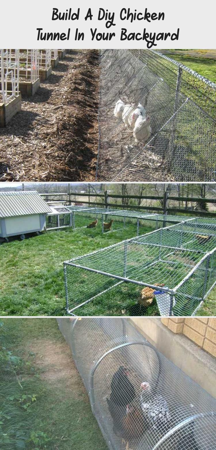 Raising chickens in your backyard or garden is great idea to get the freshest eggs and healthy meat It seems to be a good idea to allow chickens to free range but problem...