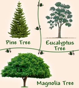 Types Of Evergreen Trees That Will Leave You Wonder Struck