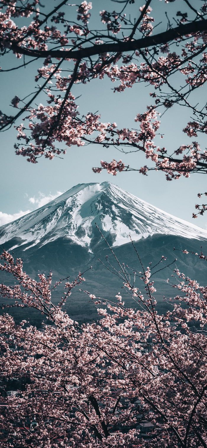 Mt Fuji With Sakura In Japan Iphone Wallpaper Mountains Japanese Wallpaper Iphone Japanese Mountains