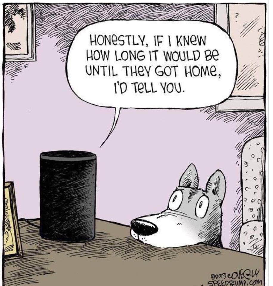 Pin by jenny de hoff on dogs your dog funny dogs memes