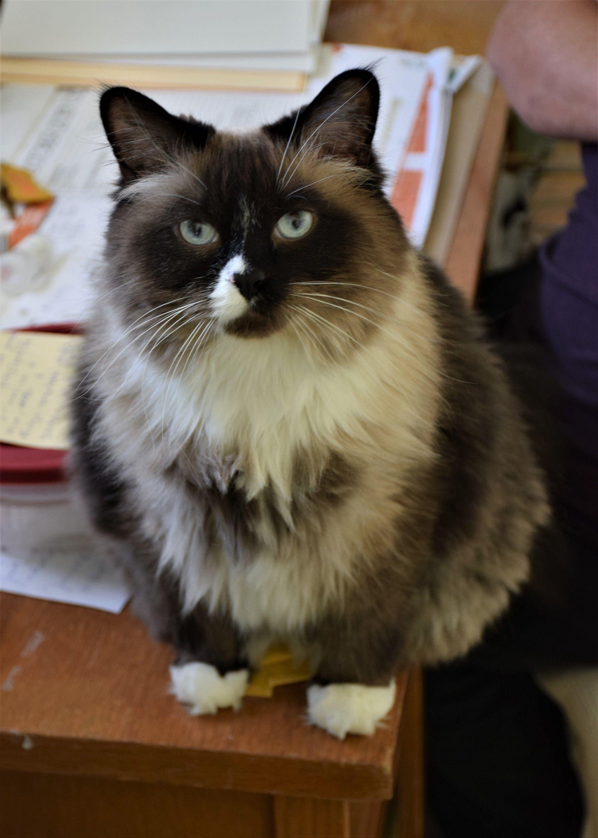 Adopt Roscoe on Pet adoption, Cats, kittens, Cats