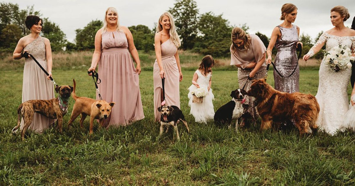 Instead Of Flower Bouquets Bridesmaids Walked Down The Aisle With Adoptable Shelter Dogs Dogs With Jobs Shelter Dogs Dogs Up For Adoption