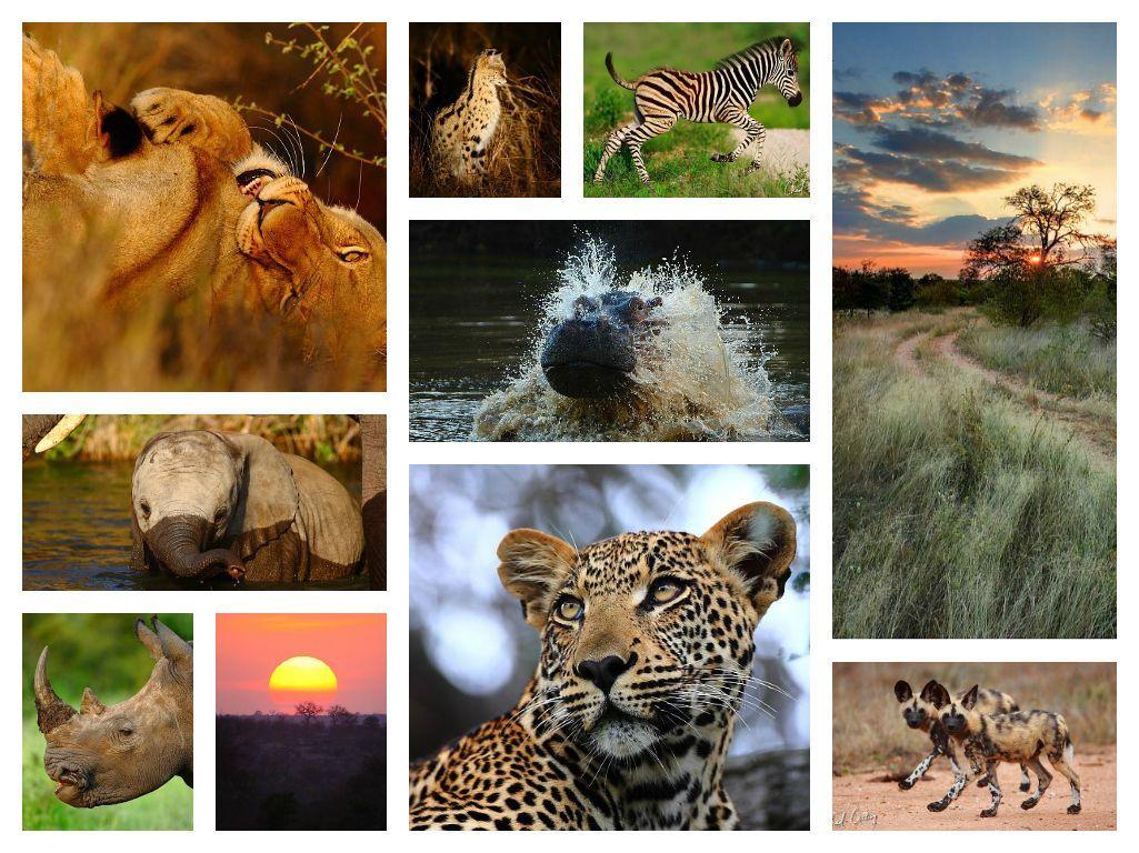 South African Wild Animals Facts Animals, Wildlife
