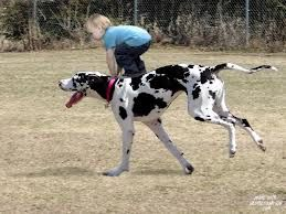 I'lm riding the horse. Look, maam)) #Great #Dane | #greatdane #dog #breed with #kid | #love |  #children |  #friendship |