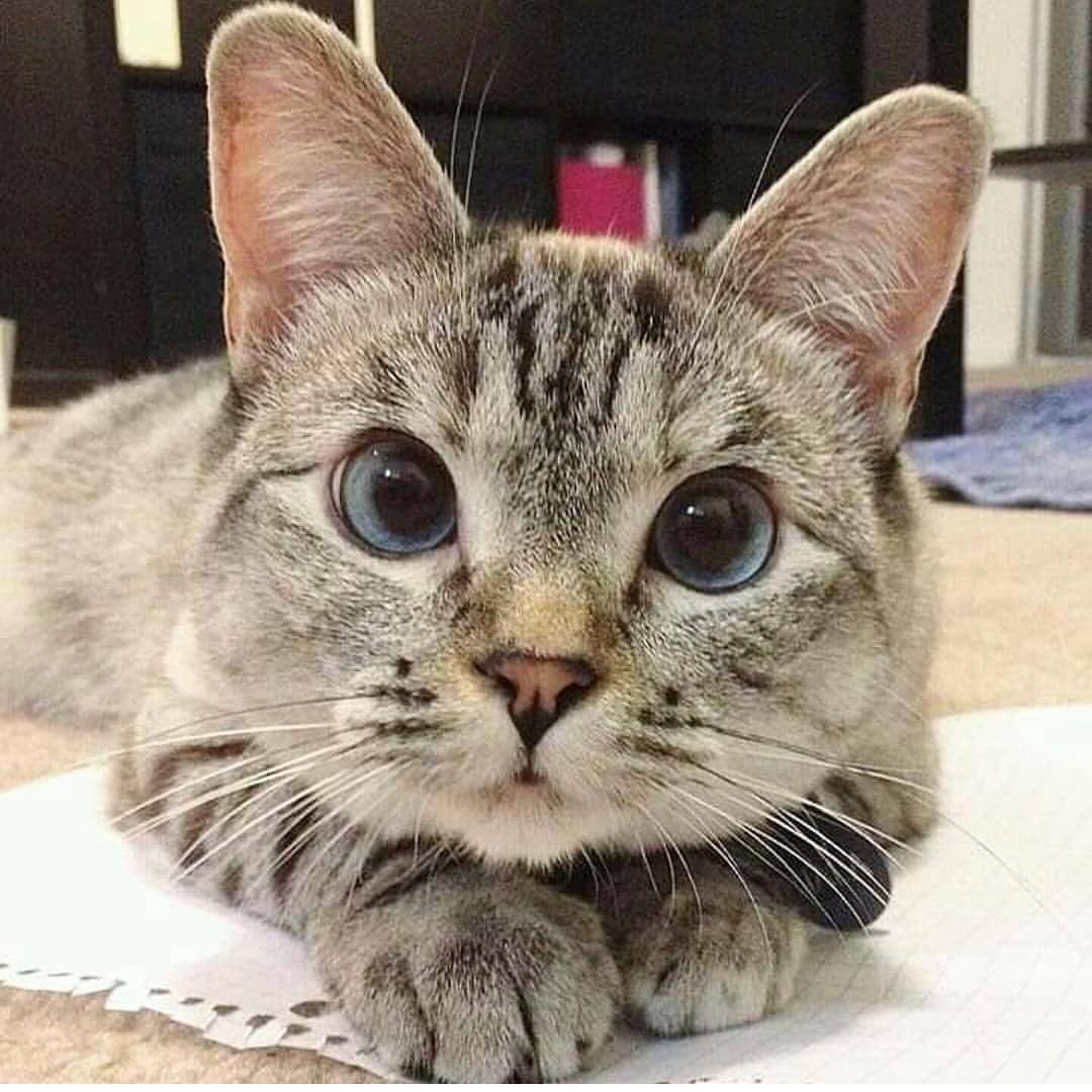 cutecatsCat Instacat Instacats Meow Instacat_meows