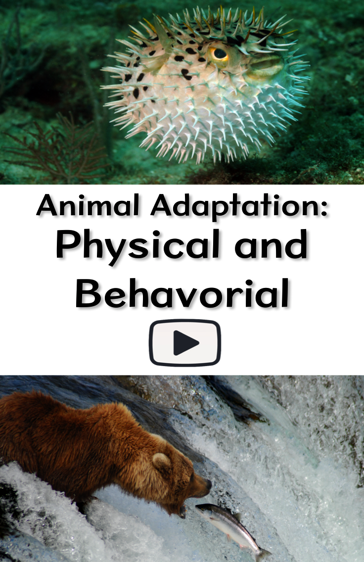 Animal Adaptation Physical And Behavioral Animal Adaptations