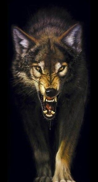 Wolves Sleeping Together Snarling Wolf Wolves 15975099 318 587 Jpg Wolf Poster Snarling Wolf Wolf Tattoos