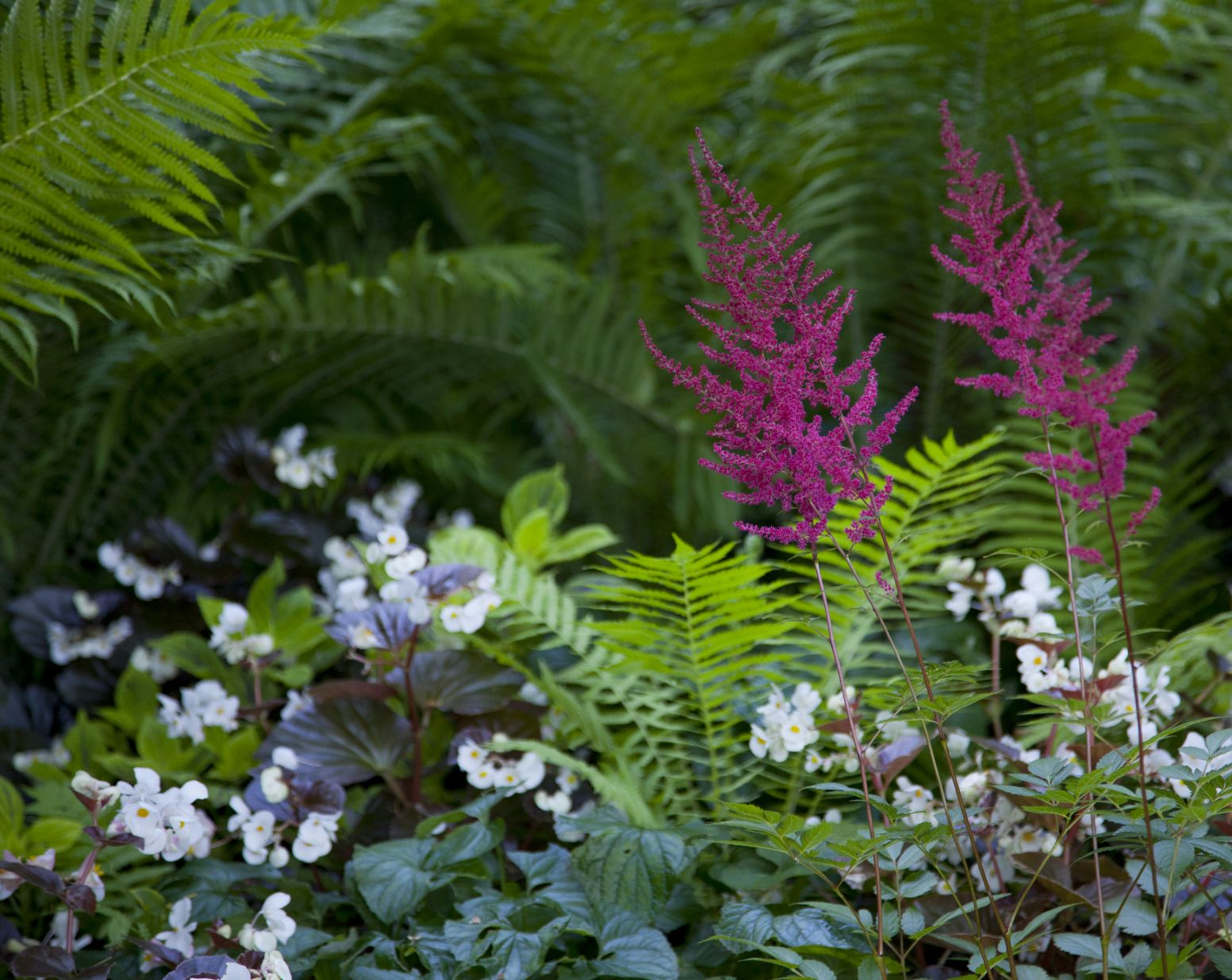 Plants That Grow Well With Astilbe – Ideas For Astilbe panion Plants