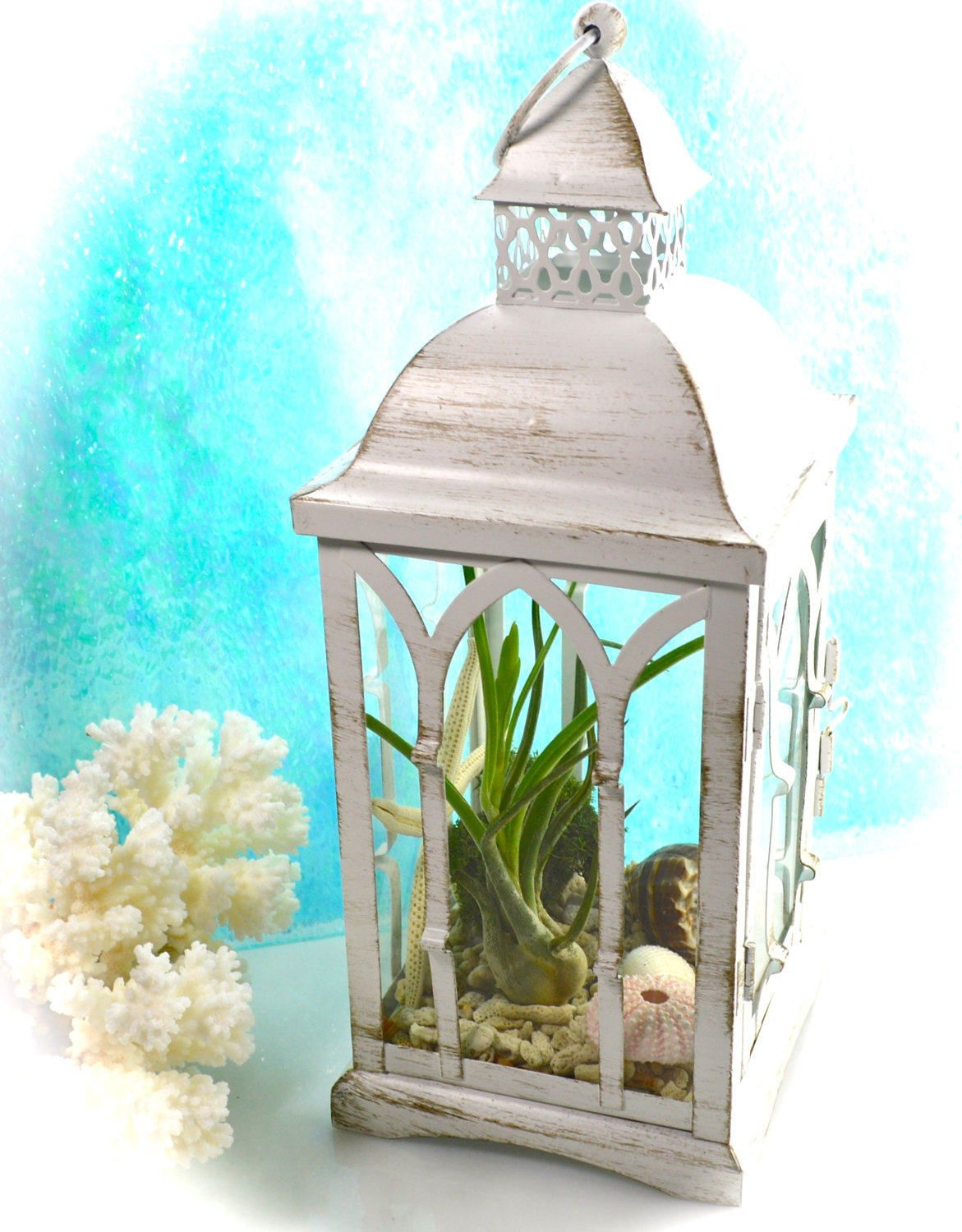 Lantern terrarium kit or candle holder beachy nautical