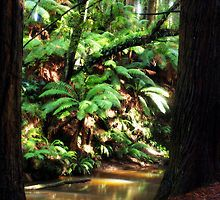 Nature frames nature by Kylie Moroney