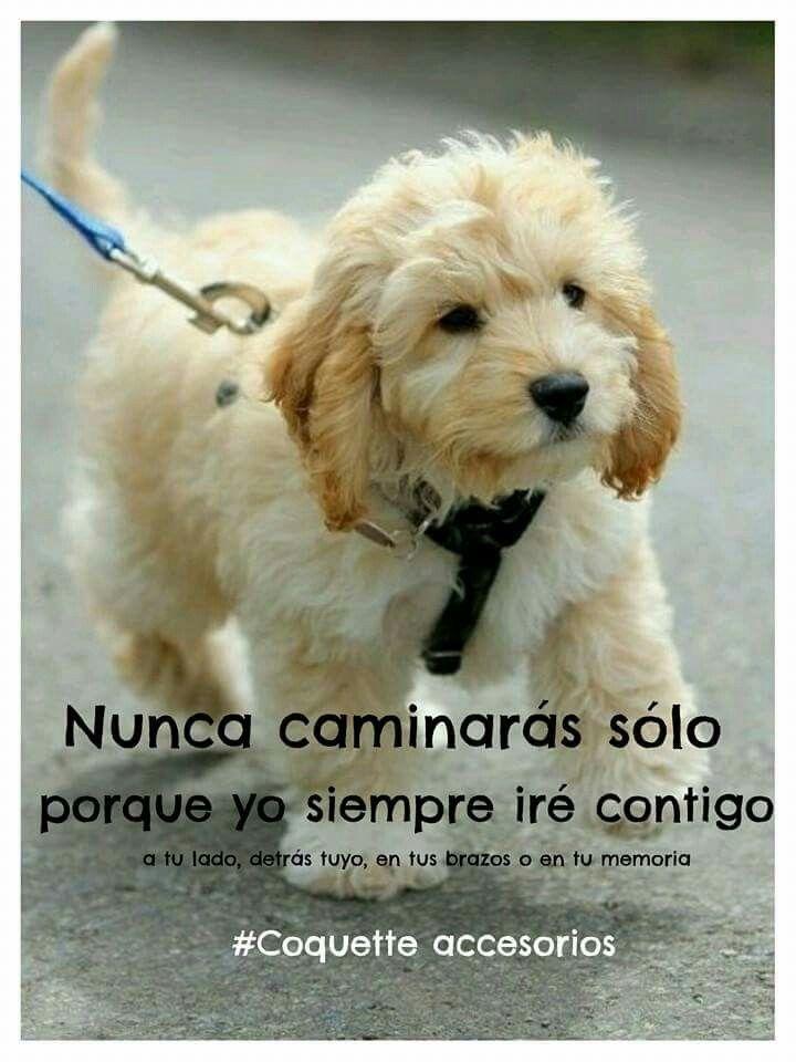 Coquette Frases Animales Perros Mascotas Verdadero Amor Por