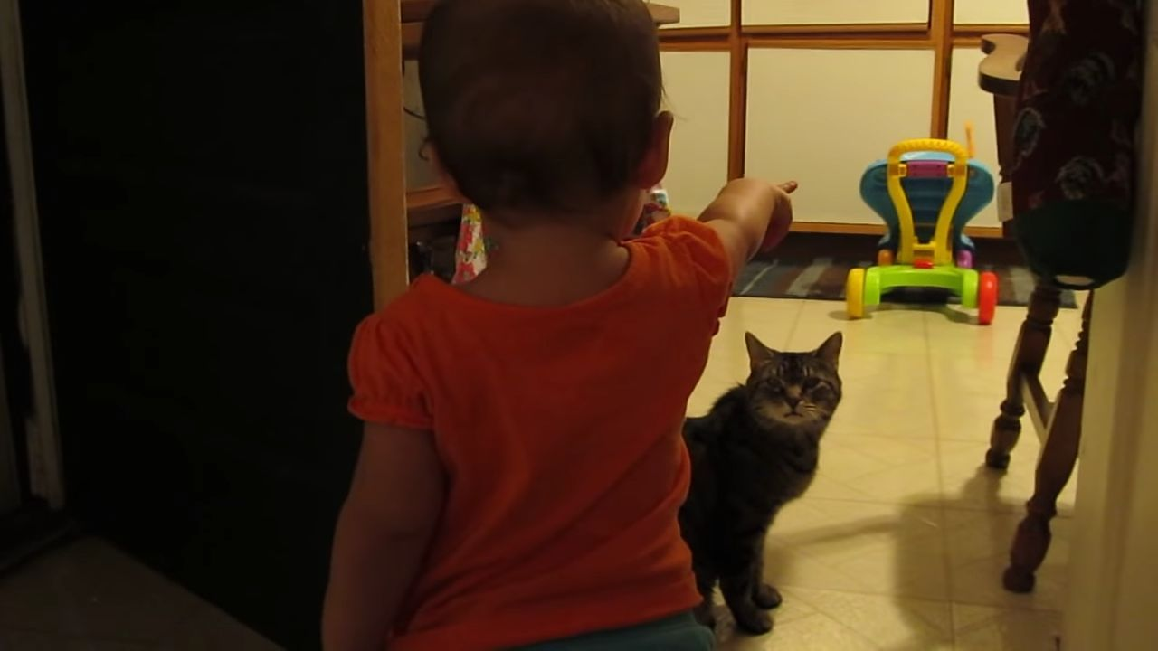 Captura de YouTube Gatos, Hasta mañana, Hijos