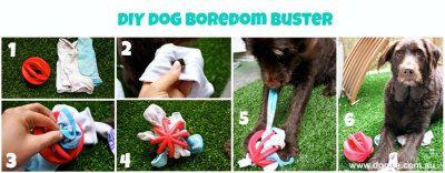 DIY-dog-boredom-busters